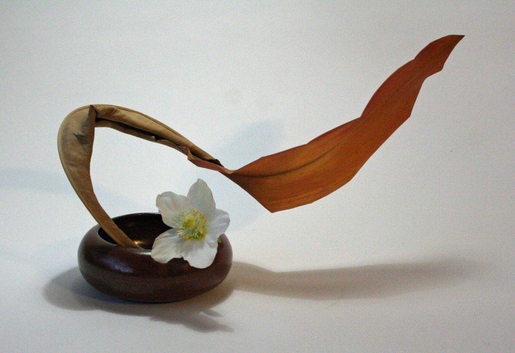 Dried strelitzia and aspidistra leaves with white hellebore