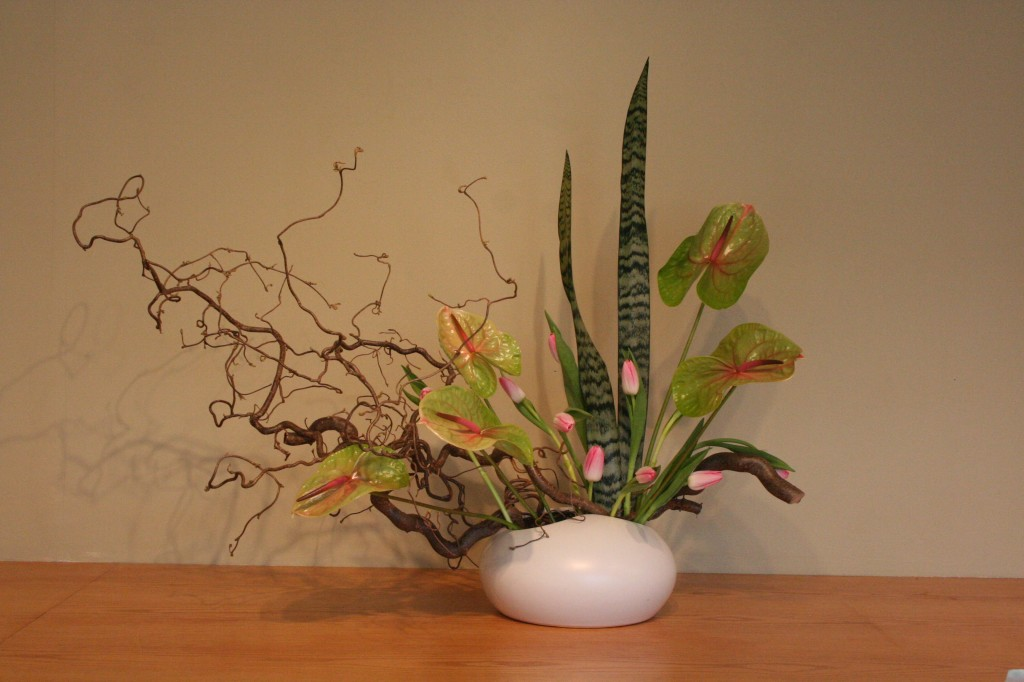 "Contorted filbert, tulips, sansevieria, and anthurium ""Verino"""