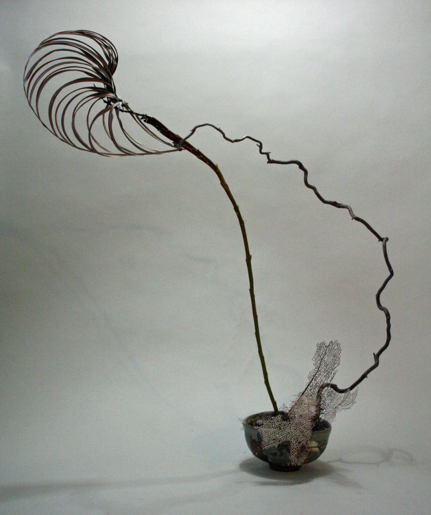 Dried manipulated palm, fasiated willow, contorted filbert and dried sea fan