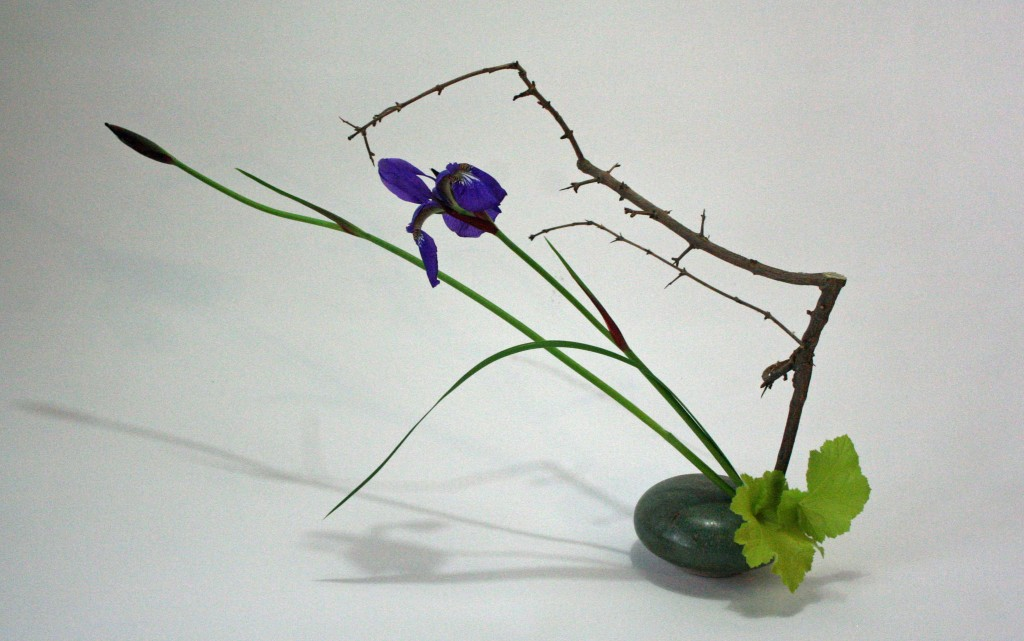 Iris, pomegranate branch and heuchera