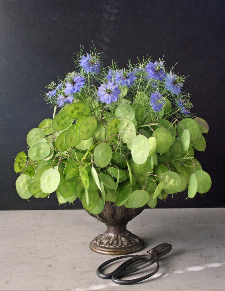 Lunaria and nigella
